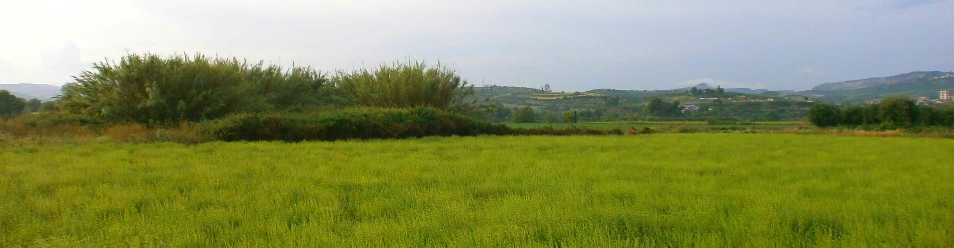 Aroma Farms
