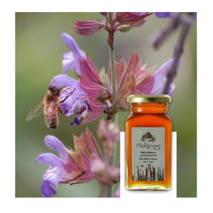 Κρητικό Μέλι Δάσους με Φασκομηλιά | Φυσικό Ελληνικό Άθερμο 450g | Μελίγυρις